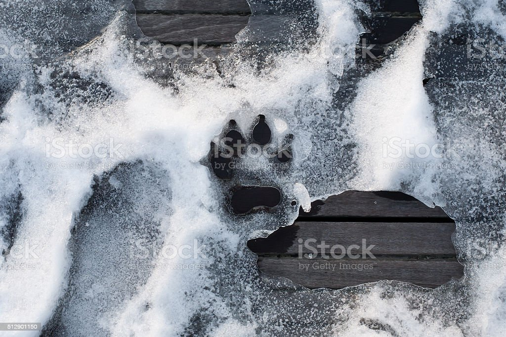 trace of dog paw on snow; print of animal foot stock photo