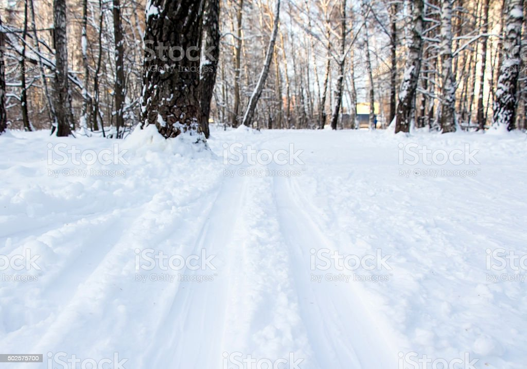 Trace of skis, ski-track in forest stock photo