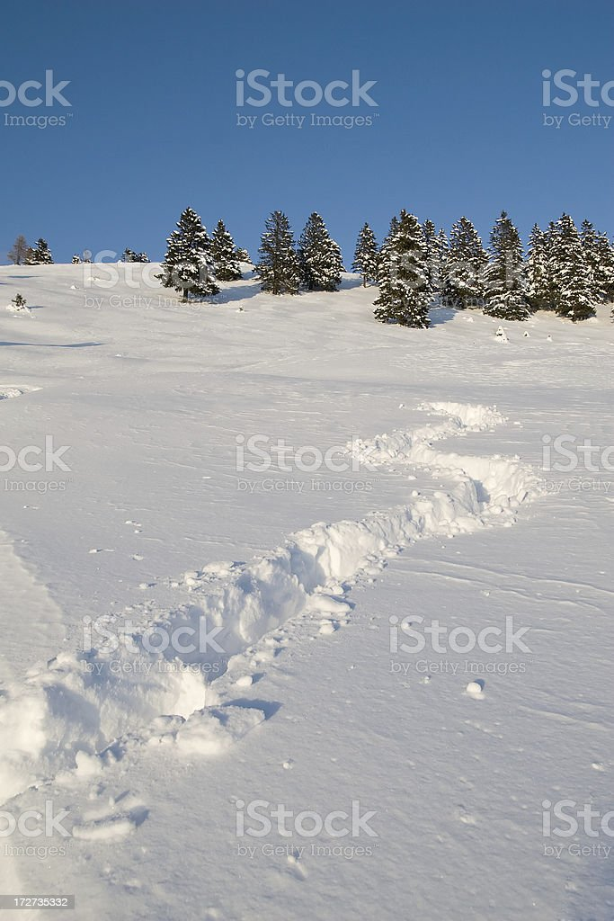 Traces in powder snow royalty-free stock photo