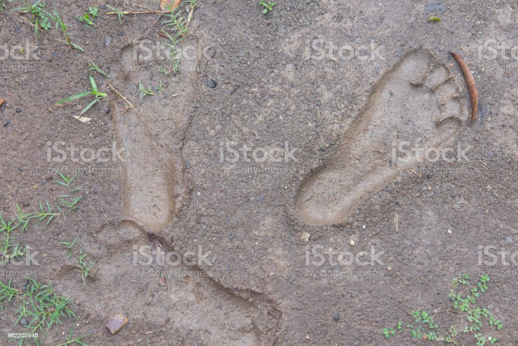 Traces of feet of people on mud after raining stock photo