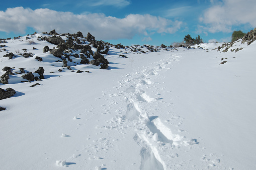 istock traces of hiker with snowshoes prints in the fresh snow 1131240379