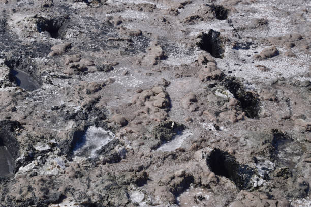 Traces of human feet in the salt lake  mud stock photo
