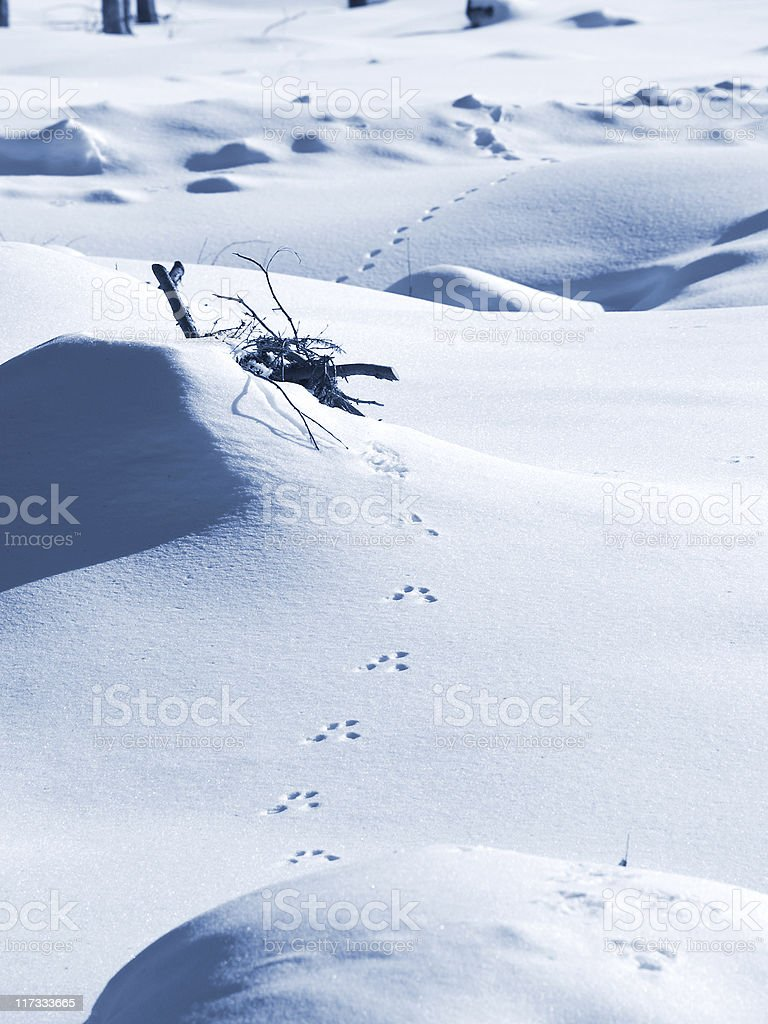 Traces of rabbit in the snow stock photo