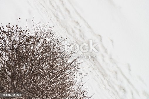 istock Traces of shoes on clean white snow near tree. Track of boots on snowdrift. Textured winter background of snowy footpath. Snow covered road with copy space. Abstract minimalist snowy weather texture. 1068785150