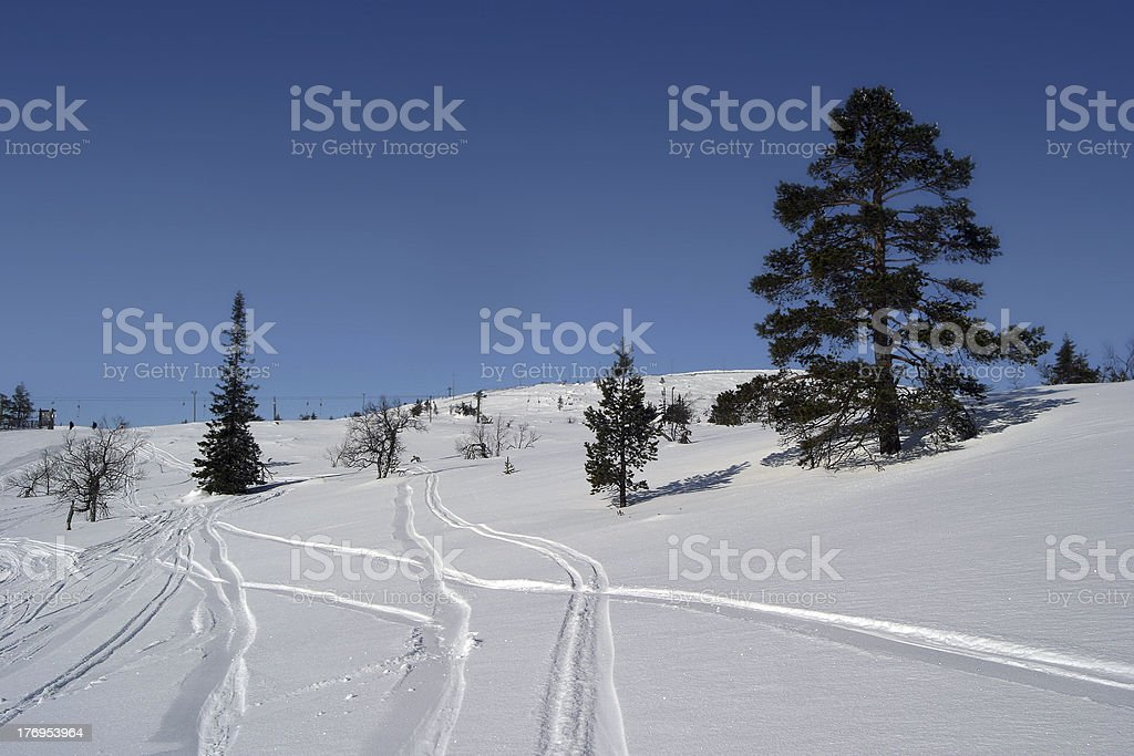 Traces of snowboards and skis on the snow. (Следы сноуборда и лыж на снегу.) royalty-free stock photo