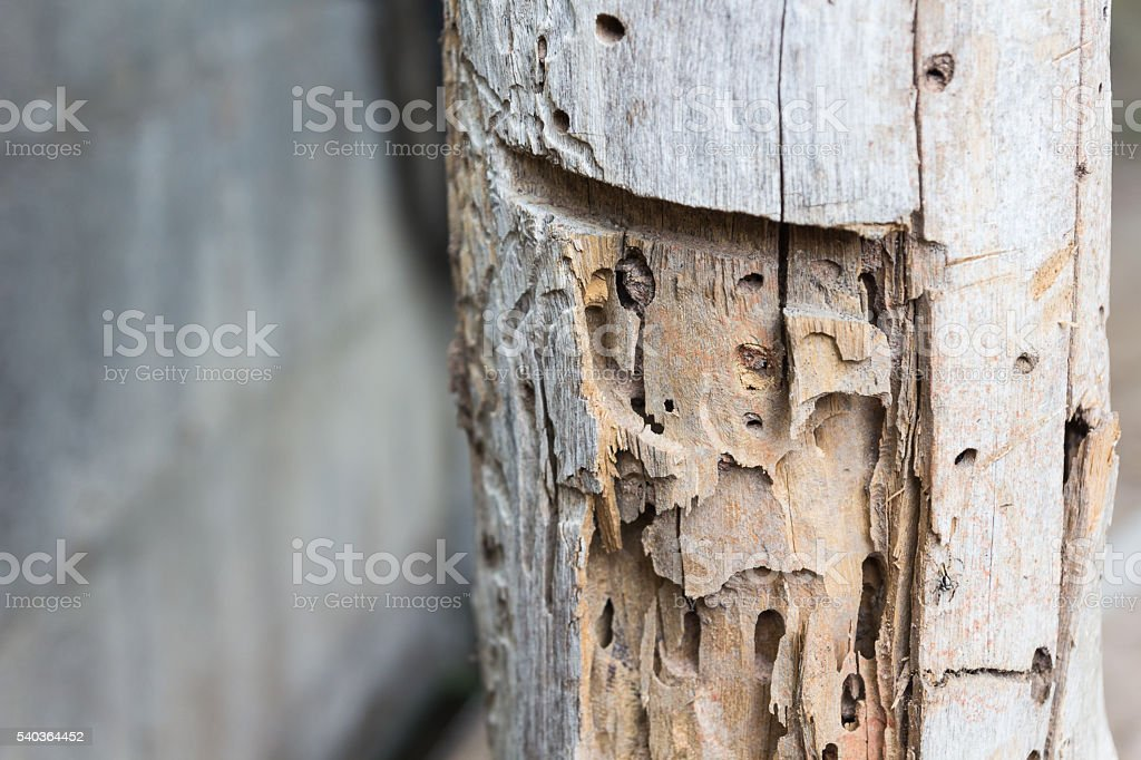 Traces of termites eat on old wood stock photo