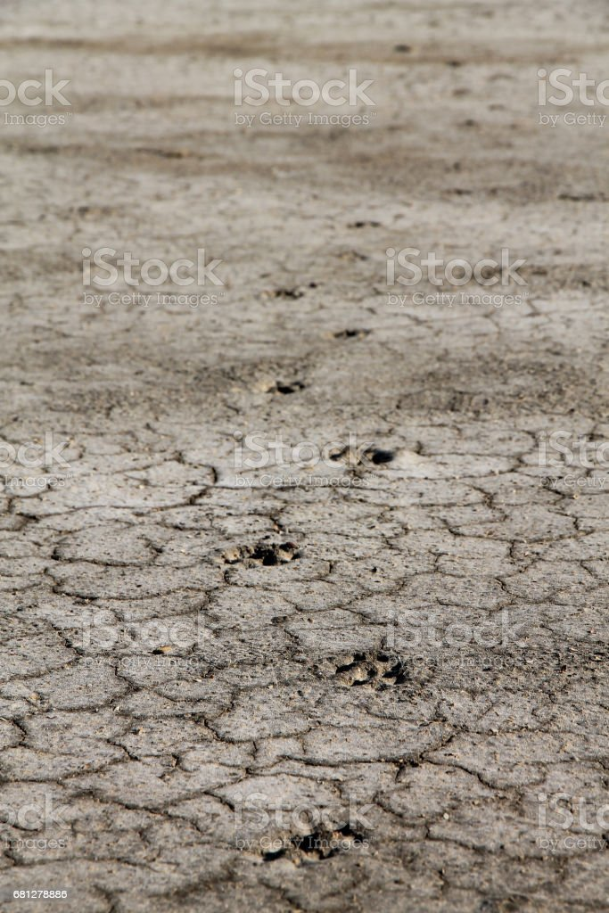 Traces on a dry ground royalty-free stock photo