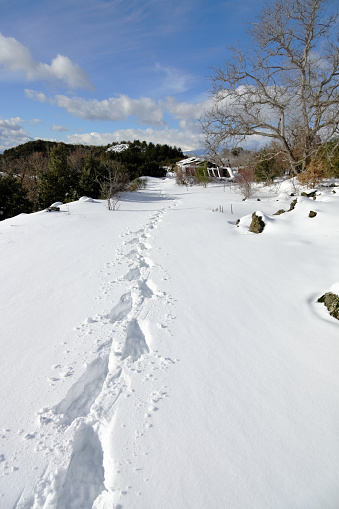 istock traces snowshoes prints on the snow in winter Etna Park, Sicily 1210482281