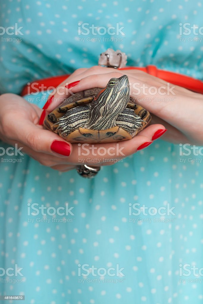 Trachemys scripta. Freshwater red eared turtle in woman hands - Royalty-free 2015 Stock Photo