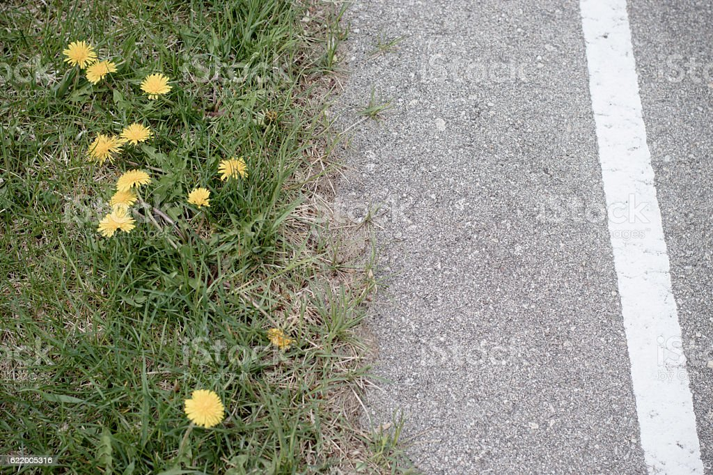track and field course dandelions and line stock photo