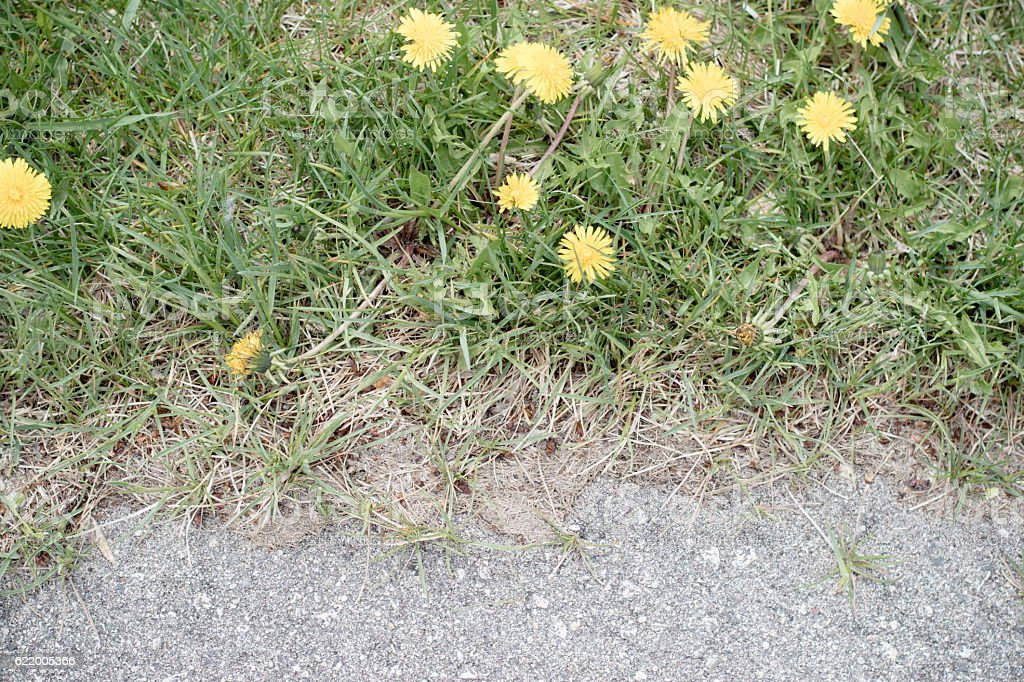 track and field course dandelions stock photo
