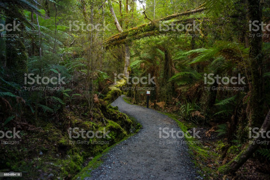 Track at Lake Matheson, New Zealand stock photo