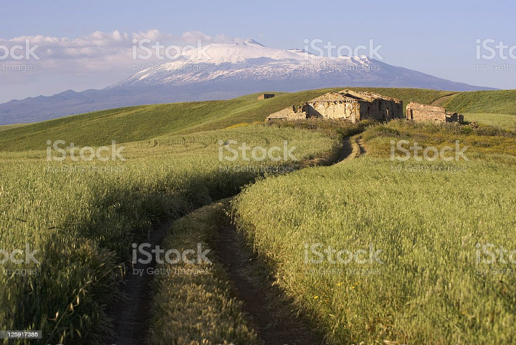 track cross cereal field on background Etna royalty-free stock photo