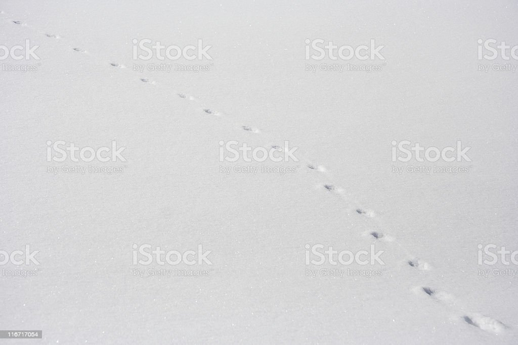 Track In Plain Snow royalty-free stock photo