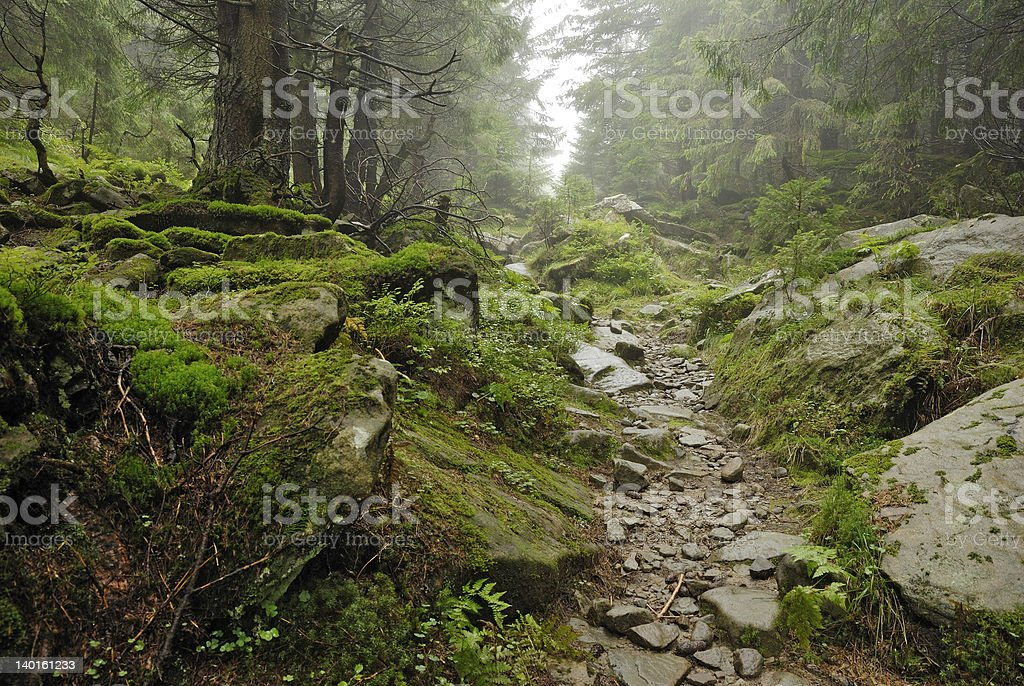 track in wilde forest stock photo