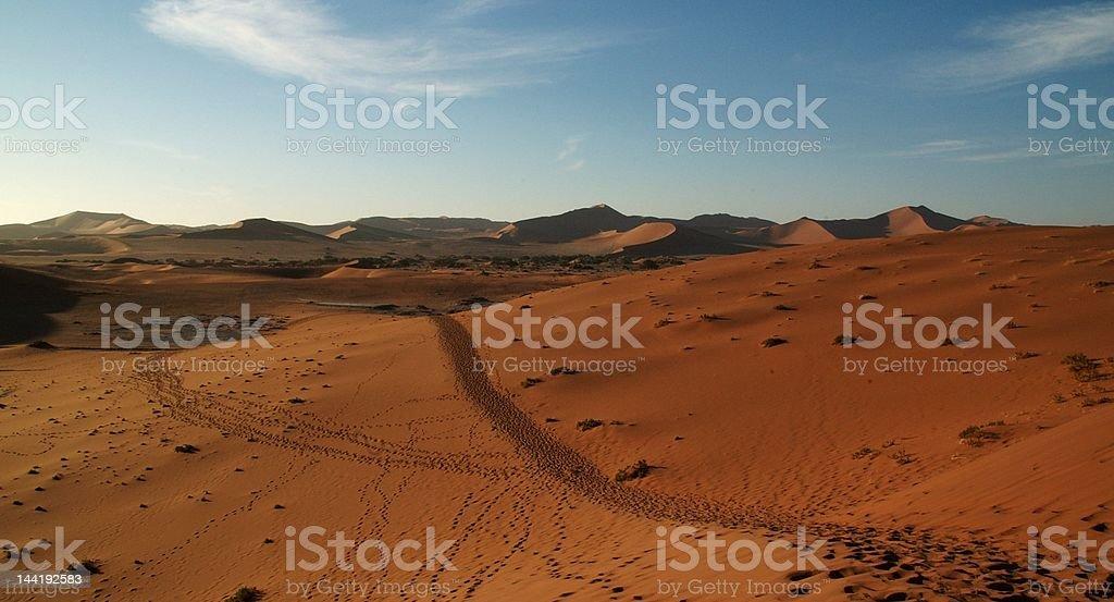 Track through the desert landscape royalty-free stock photo