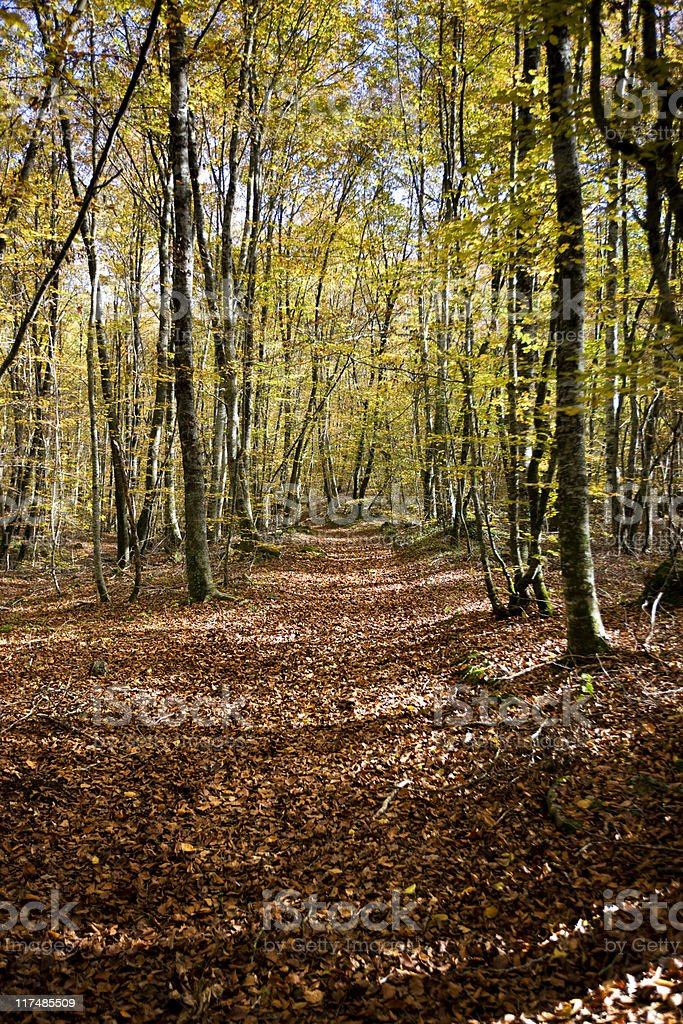 Track to the woods royalty-free stock photo