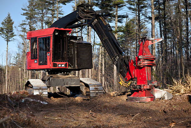 tracked feller buncher for harvesting logs - logging equipment stock photos and pictures