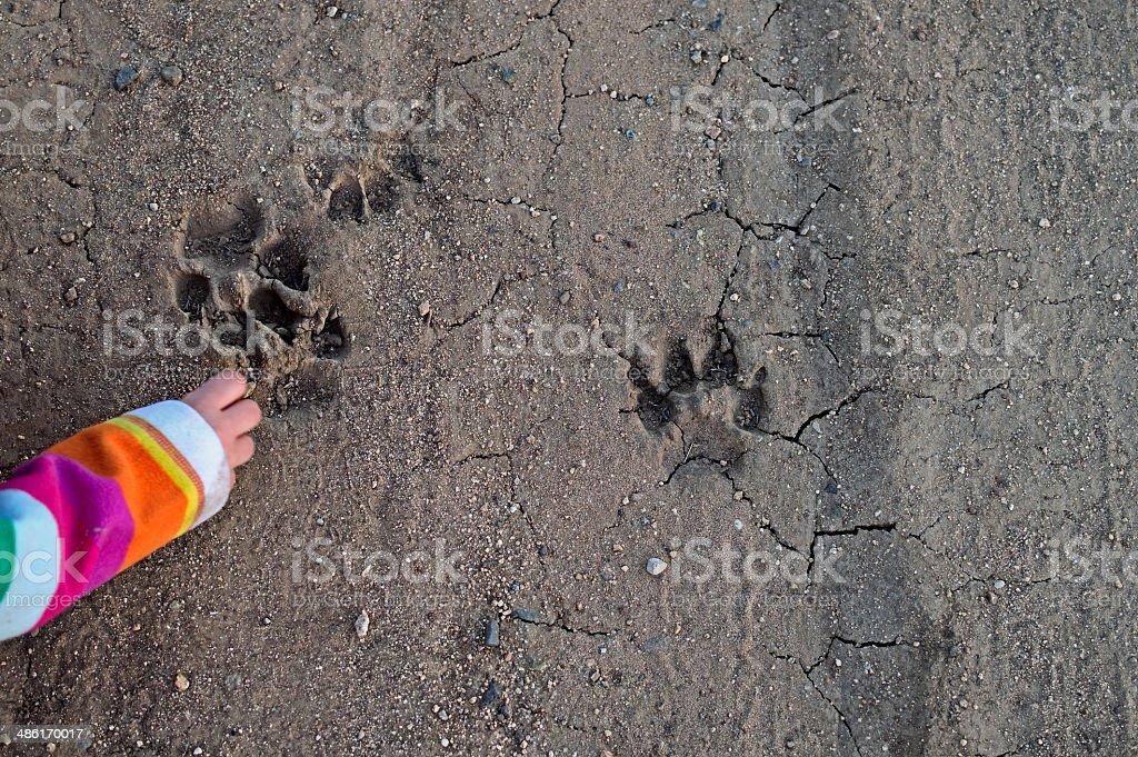 Tracking animal prints stock photo