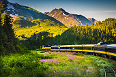 Grandview, Alaska, USA-August 10, 2007- The Alaskan train from Anchorage to Seward passes fields of pink fireweed and spectacular mountain vistas on its 107 mile trip.