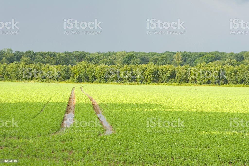Tracks in a field royalty-free stock photo
