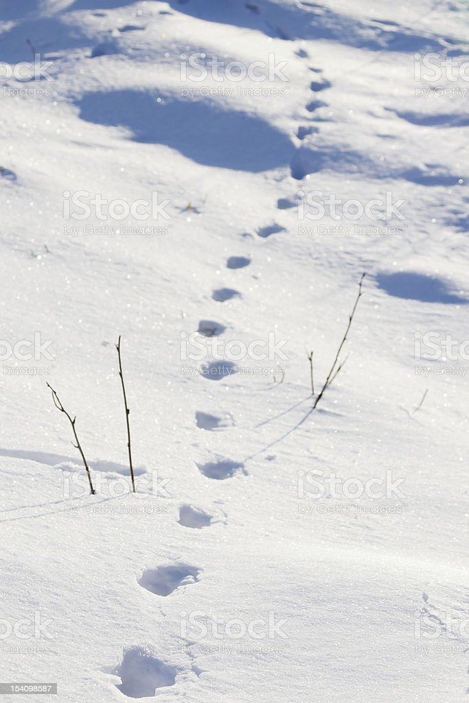 Tracks in the snow royalty-free stock photo