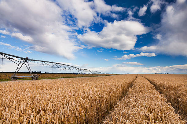 Titel, die durch Weizen Feld mit Bewässerung-Maschine – Foto