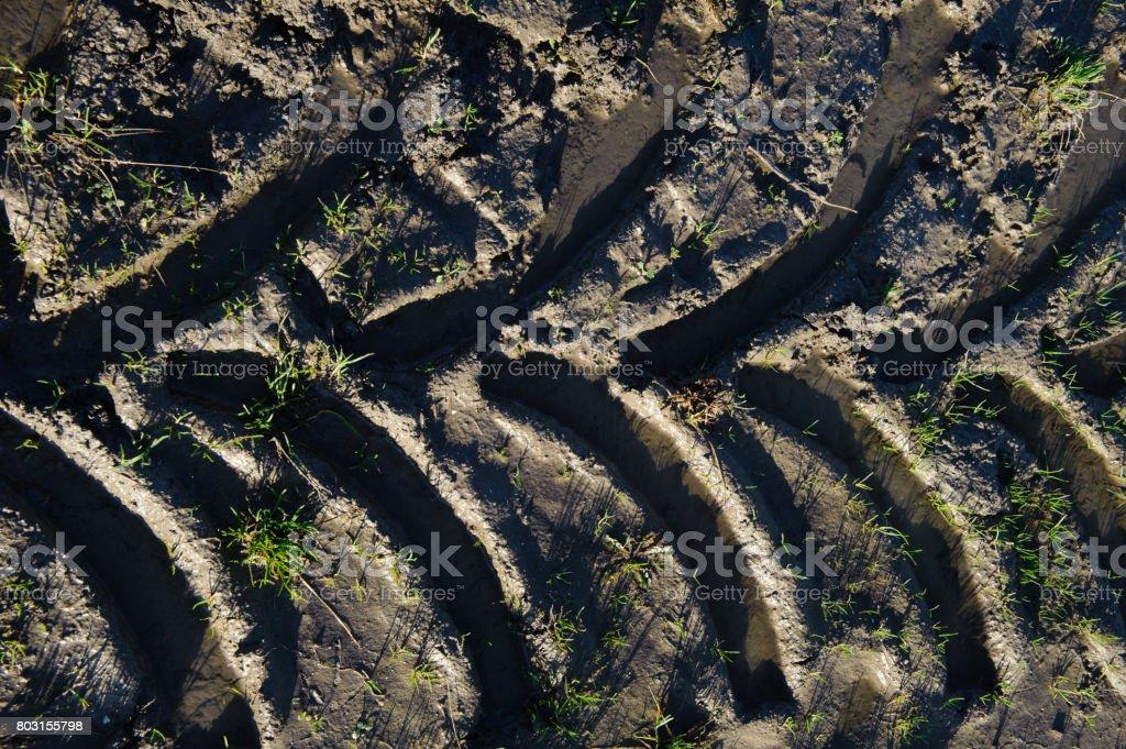 Spuren eines landwirtschaftlichen Fahrzeugs – Foto