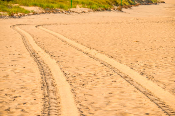 tracks of a military truck in sand stock photo