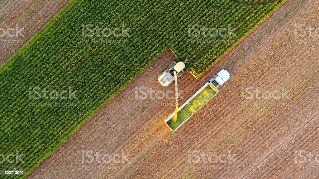Tractor and farm machines harvesting corn in Autumn stock photo
