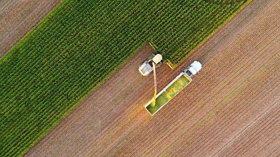 Tractor And Farm Machines Harvesting Corn In Autumn - zdjęcia stockowe i więcej obrazów Biznes finanse i przemysł