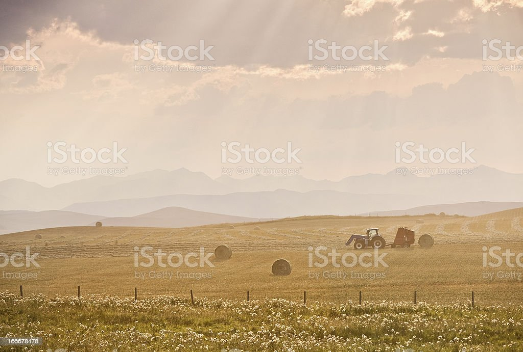 Tractor and Hay Bales During Fall Harvest on Canadian Prairie stock photo