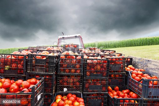 """rural infrastructure supply chain of tomatoes And potential for organizing small producers by mili antony infrastructure, logistics and supply chain management,"""" agriculture minister sharad tomatoes."""