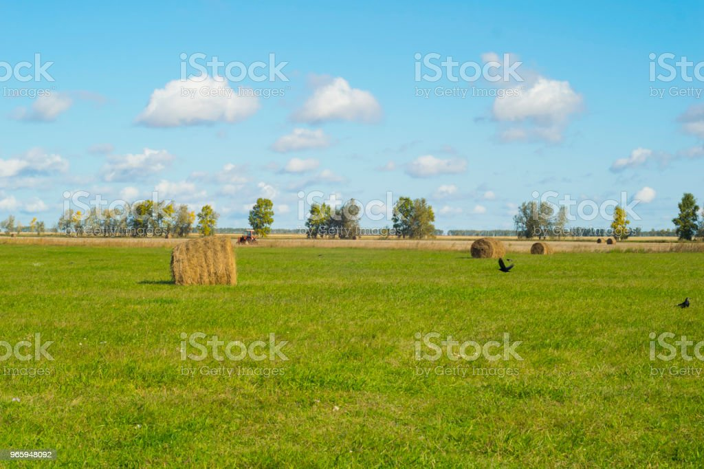 tractor harvesting hay in a field - Royalty-free Agricultural Field Stock Photo