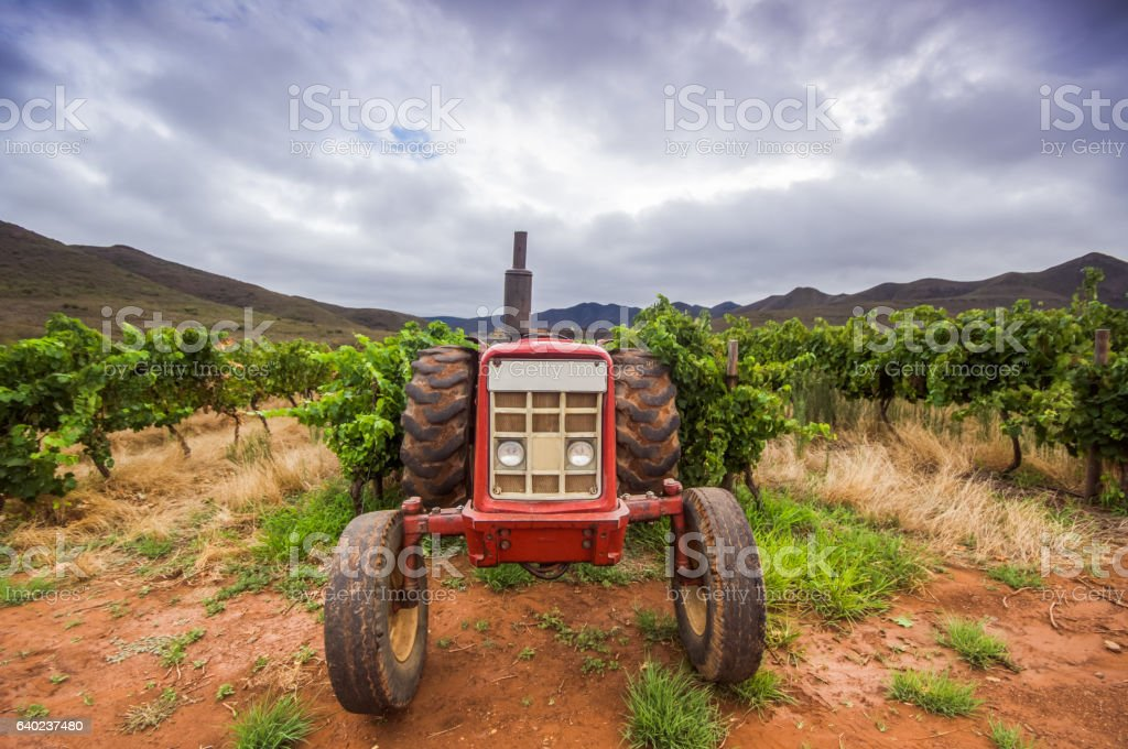 Tractor in a vineyard stock photo