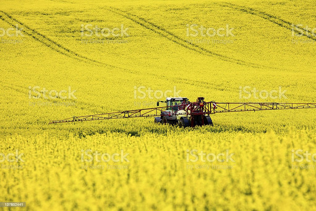 Traktor im Rapsfeld stock photo