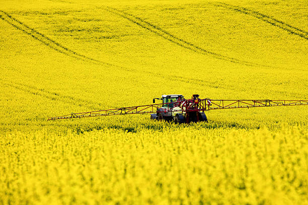 Traktor im Rapsfeld Tractor in a field of rape oilseed rape stock pictures, royalty-free photos & images