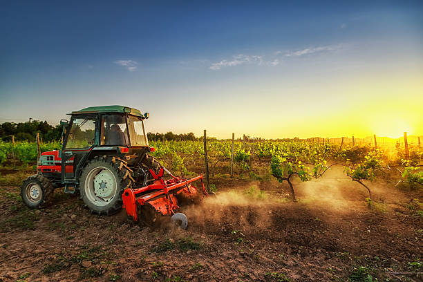 Tractor in the vineyard at sunset Vines on the field and working tractor at sunset crop plant stock pictures, royalty-free photos & images