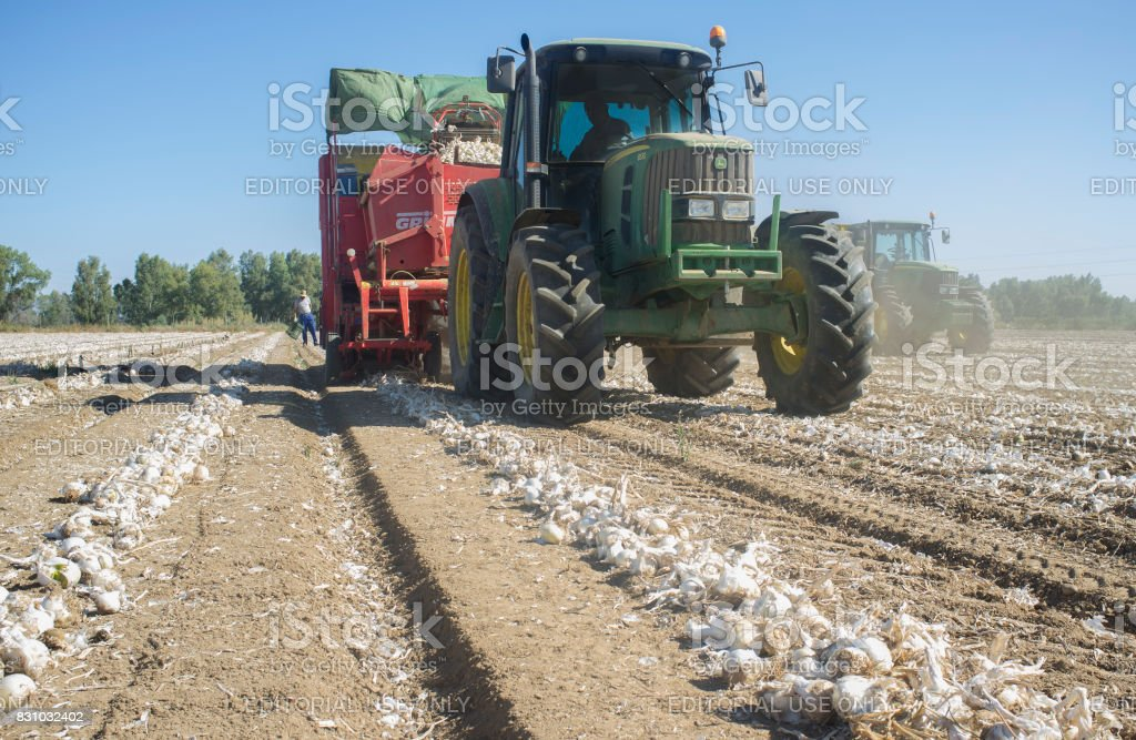 Tractor pulling an onion harvester stock photo