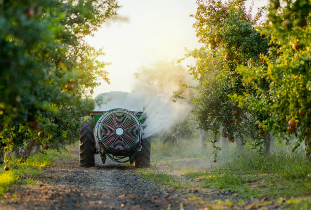 Tractor spraying insecticide or fungicide on pomegranate trees in garden Tractor spraying insecticide or fungicide on pomegranate trees in garden herding stock pictures, royalty-free photos & images