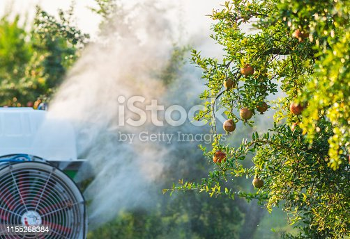 Tractor spraying insecticide or fungicide on pomegranate trees in garden
