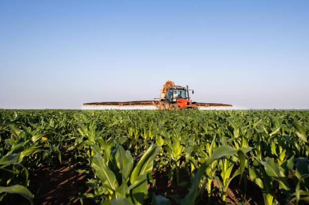 Traktor sprüht Pestizide auf Maisfeld mit Spritzer im Frühjahr – Foto