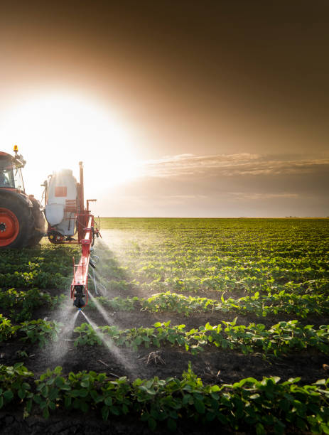 Tractor spraying pesticides on soy field  with sprayer at spring Tractor spraying pesticides on soy field  with sprayer at spring monoculture stock pictures, royalty-free photos & images
