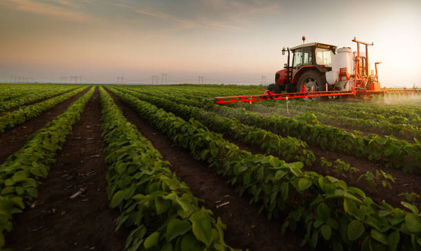 tractor spraying pesticides on soybean field  with sprayer at spring - quinta imagens e fotografias de stock