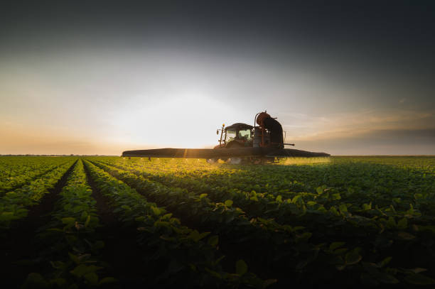 Tractor spraying pesticides on soybean field  with sprayer at spring Tractor spraying pesticides on soybean field  with sprayer at spring agricultural equipment stock pictures, royalty-free photos & images