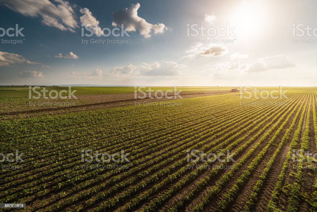 Traktor sprühen Pestizide auf Soja Feld mit Sprayer im Frühling – Foto
