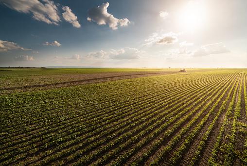 Pestisitler Soya Sahada Püskürtücü Ile Bahar Püskürtme Traktör Stok Fotoğraflar & Araba kullanımı'nin Daha Fazla Resimleri