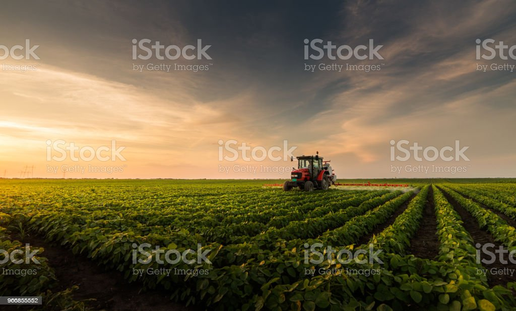 Tractor spraying pesticides on soybean field with sprayer at spring foto stock royalty-free