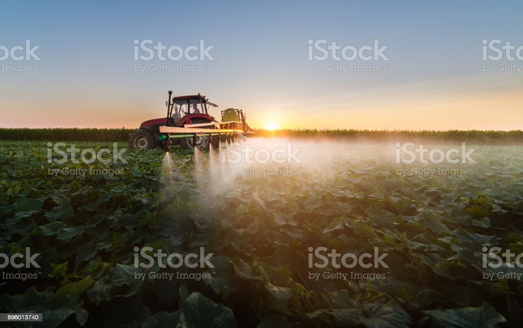 Tractor spraying pesticides on soybean field  with sprayer stock photo