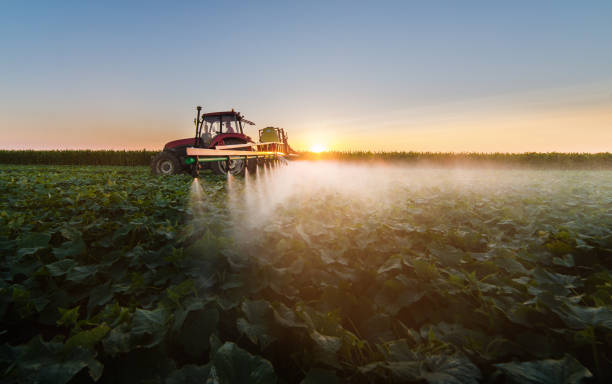 Tractor spraying pesticides on soybean field  with sprayer Tractor spraying pesticides on soybean field  with sprayer crop sprayer stock pictures, royalty-free photos & images